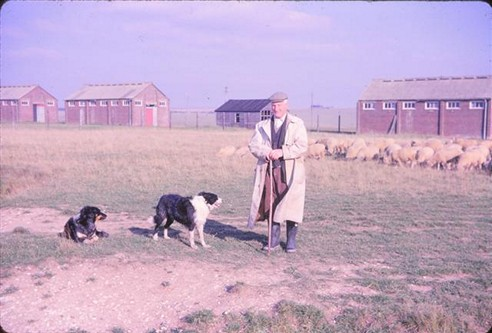 Osmond Kyte with sheep dogs, 1962