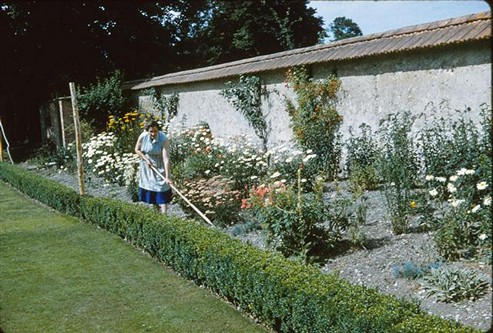 Mrs Brown tending the flower borders, 1962