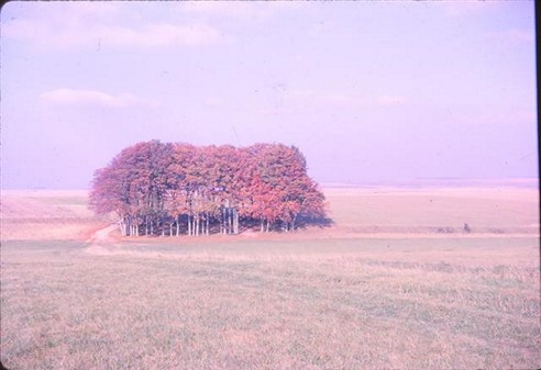 Salisbury Plain , Autumn 1962