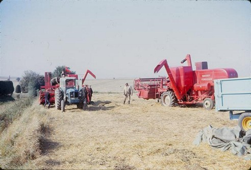 Harvesting. David Kyte on Kyte's farm, 1963
