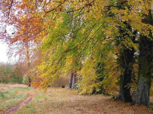 Beech Trees on the Salisbury Plain - Photograph: Rosemary Meeke